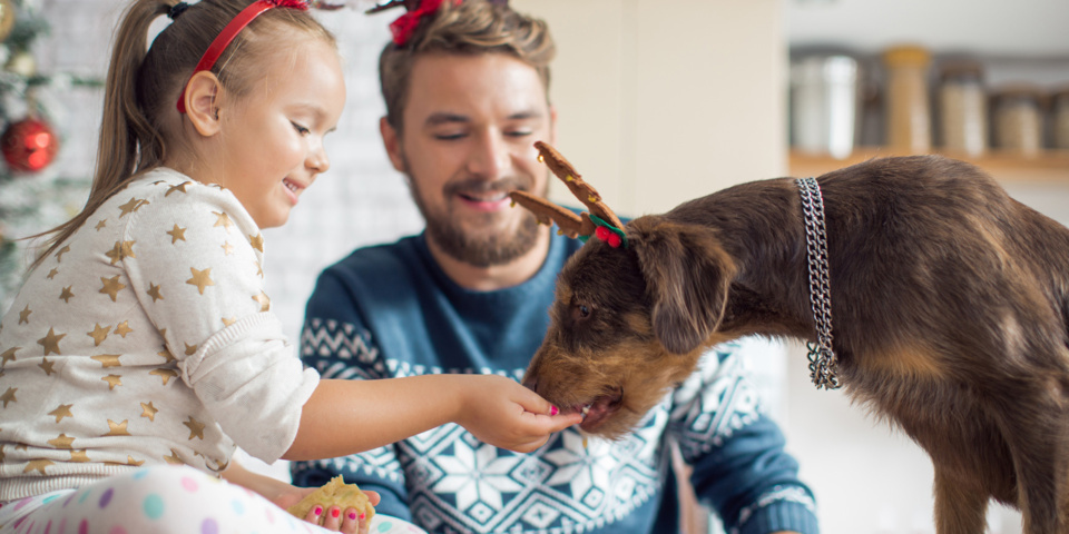 Six festive foods you should never feed your dog – plus the houseplants that can be harmful