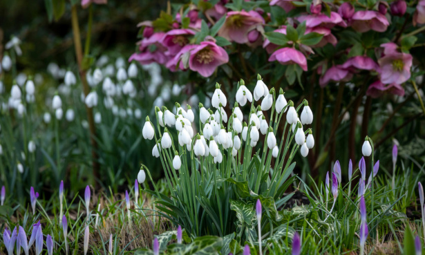 Top gardening jobs for February