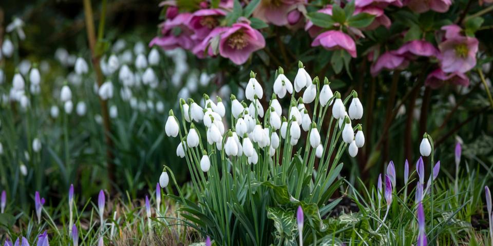 Top gardening jobs for February