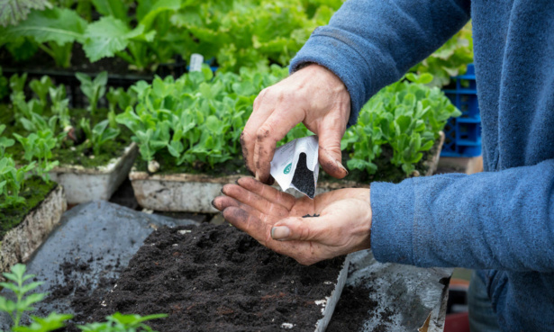 Sowing veg seeds