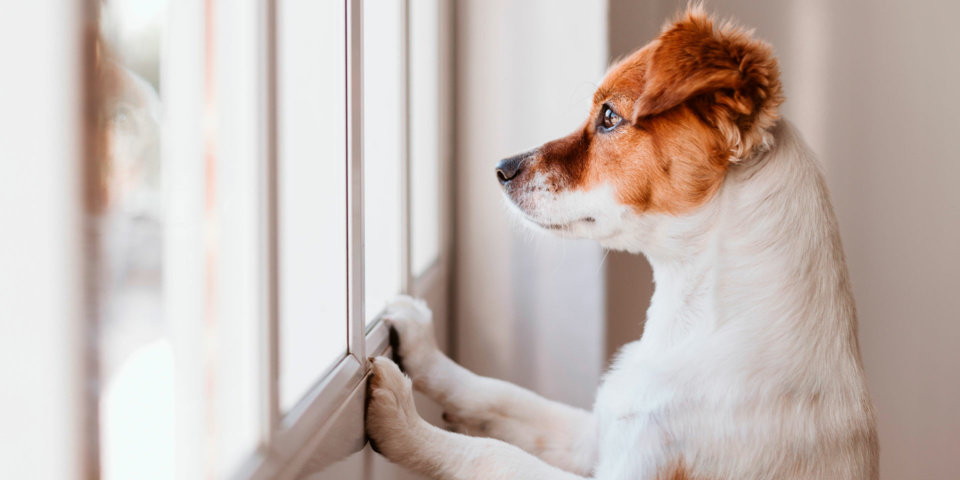 Government to make it easier for renters in England to keep pets
