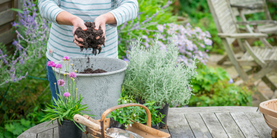 Compost for patio pots of flowers and veg