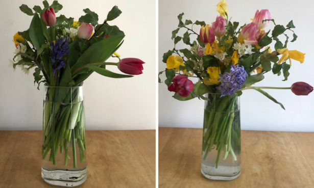 Cornish Blooms on arrival and after a seven days.