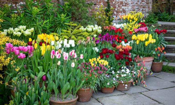 Top gardening jobs for April