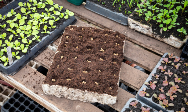 Seed tray with seeds in
