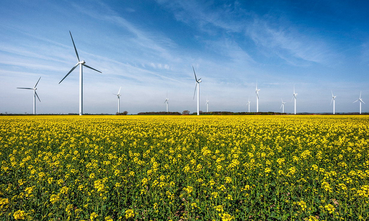 wind turbines in a field in spring
