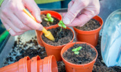Peat compost set to be banned – which peat-free composts are any good?